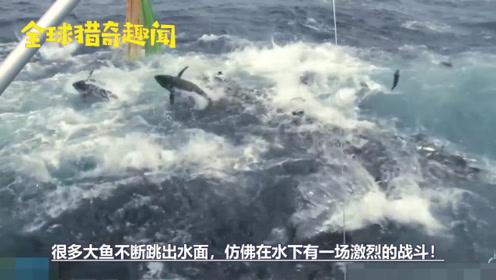 海面上大鱼乱窜!好奇男子潜入水中,这才发现水下令人惊叹的画面