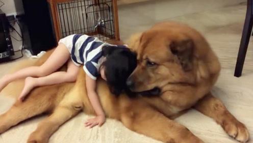 宝宝躺猛犬身上睡觉,突然不小心掉下来,下一秒猛犬的反应太暖了