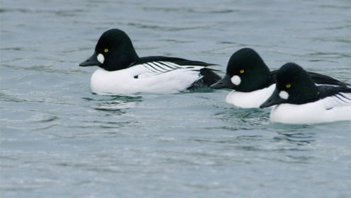 世界上最能抗寒的动物,生存能力极强,零下110度都冻不死!