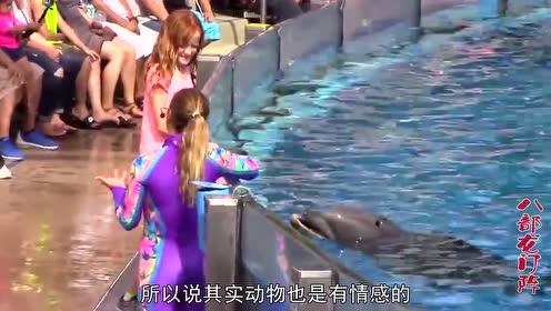 为什么海豚总是很喜欢蹭孕妇的肚子?它是怎么知道这个人怀孕了?