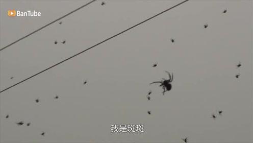 """上百万蜘蛛从天而降下起""""蜘蛛雨"""",一夜之间整个小镇都是蜘蛛网"""