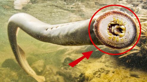 6个不起眼却致命的海洋动物!见到它们赶紧跑!