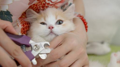 小猫拒绝剪指甲 铲屎官不仅唱歌还拿小鱼干哄