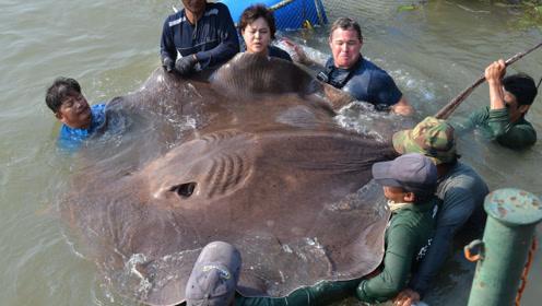 最致命的8种深海动物,眼睛长41cm,生活在2000多米海底
