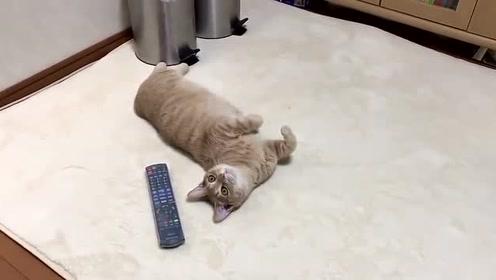 橘猫四仰八叉的躺在遥控器旁:看电视还是撸猫,自己看着办