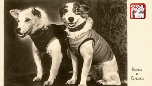 太空志11:狗说:我从太空活着回来了