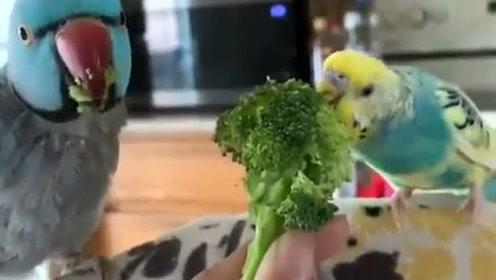 这个花菜,我拿到嘴边就会吃