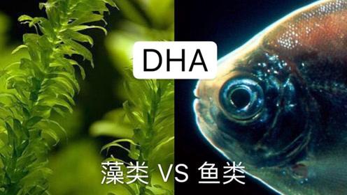 准妈妈补充有讲究:DHA藻类好还是鱼油好?EPA适不适合胎儿?