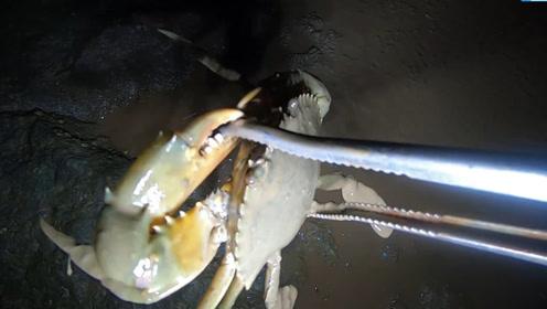大雨后小志去赶海,发现的螃蟹都挺乖的,随便抠抠就跑出来了