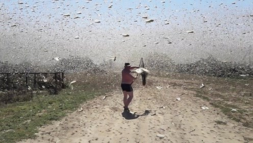 该物种在中国混不下去了,竟到俄罗斯泛滥成灾,网友:要帮忙吗?