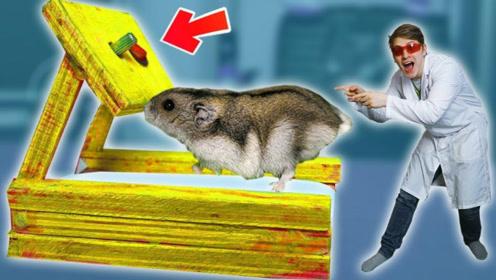 自家仓鼠太胖该咋办?老外为其打造专属跑步机,再也不怕它长膘!