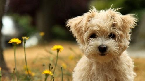 狗狗的感官十分灵敏,甚至可以看见人类看不见的东西!