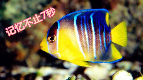 鱼类的记忆力不只有七秒!科学证实,通过训练鱼也可以长期记忆