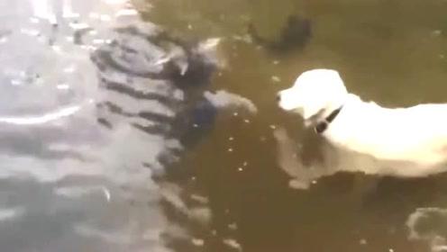 这次真的是鱼先动手的,太聪明!最会抓鱼的狗