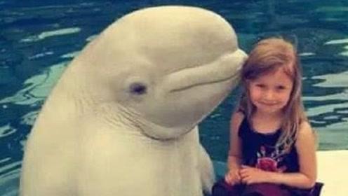 33年竟杀死3人,海豚的微笑,是全世界最残酷的骗局?