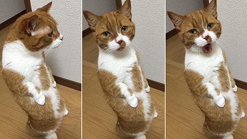 猫咪立起来超级萌 最后1个 站立原因让人心疼