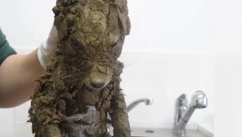 """小伙从泥坑里捡到一只""""狗"""",带回家洗干净后吓一跳,什么东西?"""