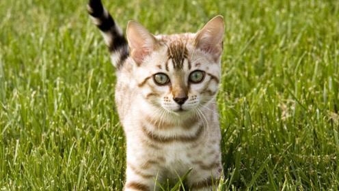 史上第一猫奴,9年拍摄20000条猫咪视频,没人看依旧不放弃
