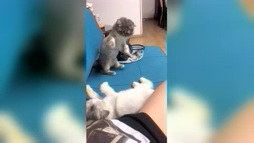 虎式猫猫拳!老猫:有一招突如其来的拳法