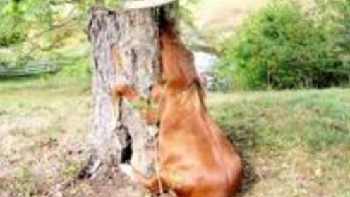 """非洲""""食人树"""",4000年来食女无数,进食方式令人心怵!"""