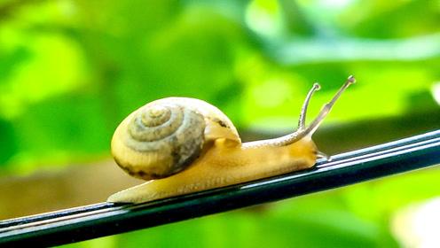 一只蜗牛的旅程!