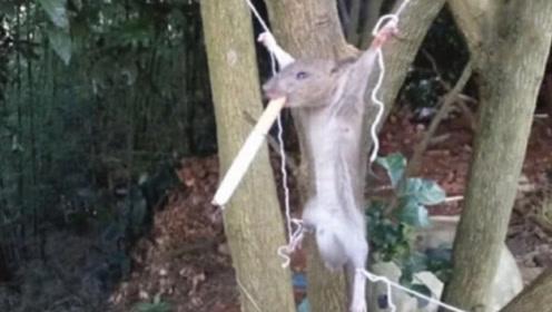 老外抓到老鼠后,逼迫其连抽10根烟,不料结局却出人意料!