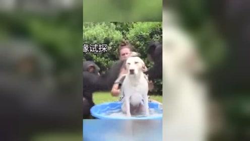 狗狗也是很无语,洗个澡毛都快撸秃了