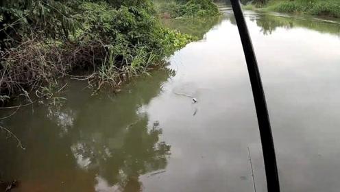 提钓到山间河边选好位置挂好鱼饵撒下钓竿,接着这收获就是连竿