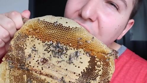 外国小哥直播吃生蜂巢,上面爬满了蜜蜂!怎么下得去口的