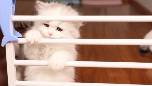 小奶猫断奶第一天 化身蜘蛛侠越狱找妈妈!