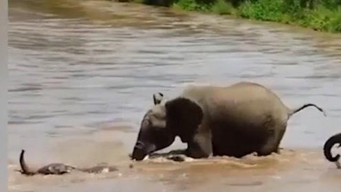 暖心!小象过河被急流冲走  家人齐出手将其救上岸