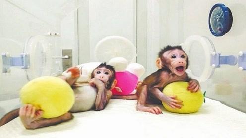 两只克隆猴在中国诞生二