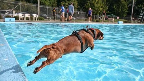 狗狗果然天生会游泳,担心主人溺水,跳到泳池拉主人上岸