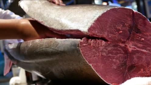 日本顶级厨师厨艺有多恐怖?价值上万元金枪鱼,吃的都不是一般人