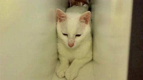 家里突然来了陌生人后,慌张猫咪们上演加强版躲猫猫