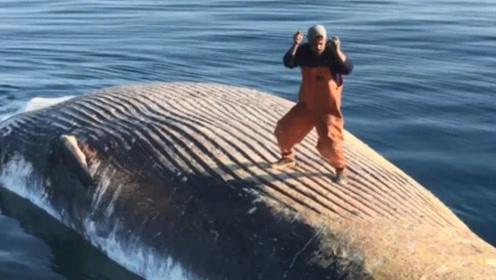 """作死小伙在鲸鱼尸体上""""蹦迪"""",看上去很帅,可惜帅不过3秒钟"""