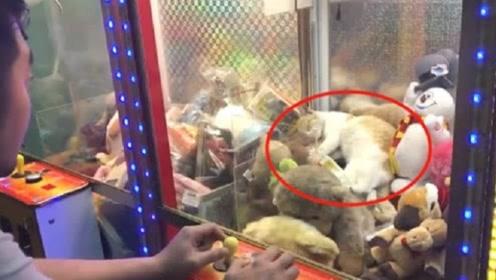 娃娃机内惊现猫咪,小伙只用一招,就将其搞到手!一起来见识下