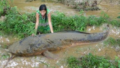农村小妹上山抓鱼,刚进水坑就发现巨大鲶鱼,够吃好几天!