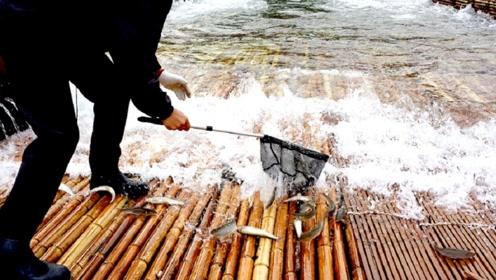 """老外发明""""捕鱼神器"""",把竹排铺到河面上,过往的鱼儿一网打尽"""