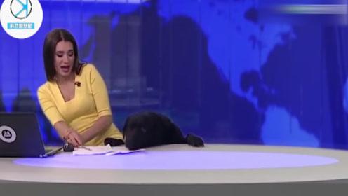 俄罗斯美女主持人直播时,突发紧急情况,收视率竟然暴涨!