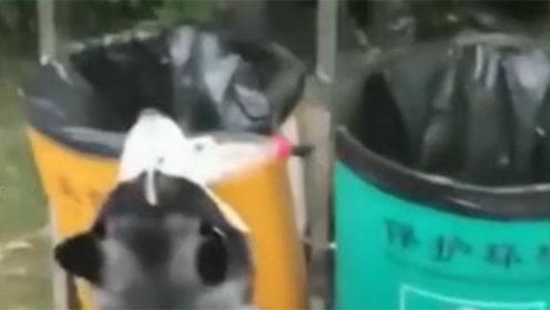 二哈帮主人捡垃圾,结果却让人笑喷了,二哈:是垃圾桶先动的手!