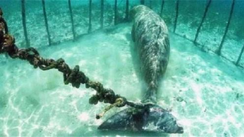 潜水员意外发现很美的鱼,被困在牢笼中,真相让人气愤!