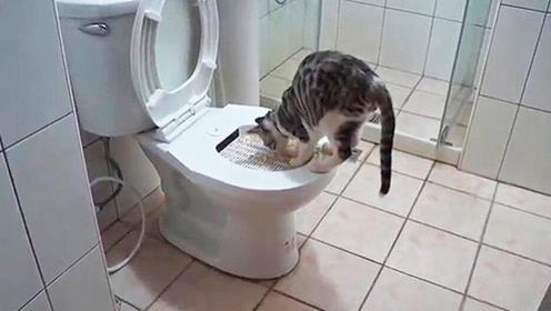 3个小技巧,让你家猫咪学会用马桶,从此不随地大小便