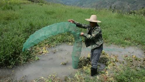 村里不起眼的小水坑,下了两个地笼收获果然意想不到