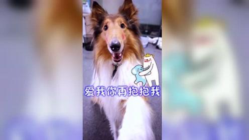 """爱狗""""三不要"""",不要因为自己的不注意,伤害到狗狗的生命啊!"""
