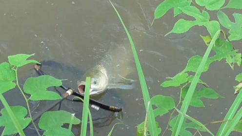野钓:钓友分享这里鱼特别多,小伙跑60公里去爆护,这鱼获亏吗