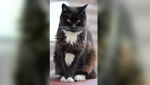 世界上最长寿的猫,相当于人类的114岁,名字也是什么的可爱了