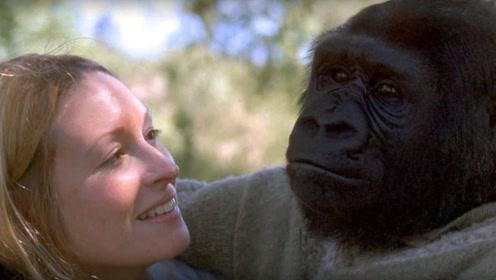 大猩猩和人类能产生后代吗?国外科学家做了实验