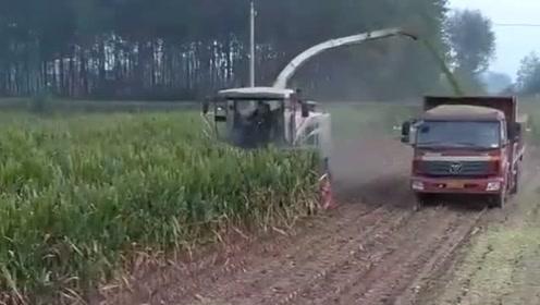 大货车跟收割机平行,收完也装满了,现在的农民真省事!