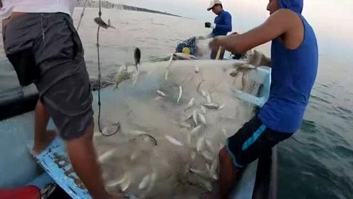 这咋办啊,天快黑了,渔网上的鱼还是没摘完啊